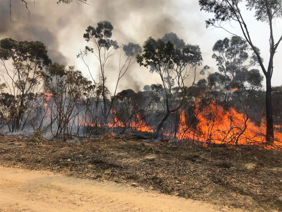 Backburning on Green Wattle Creek Bushfire